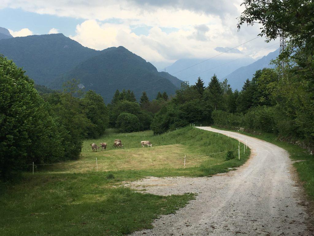 Bosco del Cerreto, terza tappa Via Valeriana